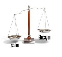 The Balancing Act of the Hormones Insulin and Glucagon